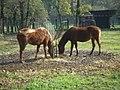 Cavalli del parco della preistoria.jpg