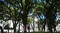Centro, Curitiba - State of Paraná, Brazil - panoramio - LUIS BELO (6).jpg