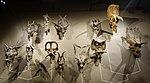 Ceratopsids utah natural history museum.jpg
