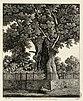 Chêne de St.Vincent de Paul - Fonds Ancely - B315556101 A PELERIN 118.jpg