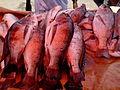 Chambo (tilapia) fish, Blantyre market, Malawi.jpg