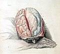 Charles Bell Anatomy of the Brain, c. 1802 (3138247450).jpg