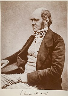 Three quarter length portrait showing Darwin's characteristic large forehead and bushy eyebrows with deep set eyes, pug nose and mouth set in a determined look. He is bald on top, with dark hair and long side whiskers but no beard or moustache. His jacket is dark, with very wide lapels, and his trousers are a light check pattern. His shirt has an upright wing collar, and his cravat is tucked into his waistcoat which is a light fine checked pattern.