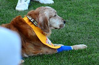 Chase (dog)