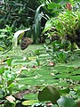 Chemnitz botanischer garten schetterlingsschau 4.JPG