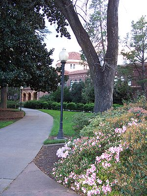 California State University, Chico - Chico State campus in the spring