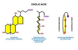 Fatty acid metabolism - Wikipedia