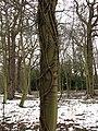 Church plantation - geograph.org.uk - 739004.jpg