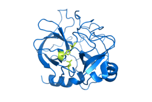 Serine protease - Image: Chymotrypsin enzyme