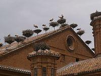 Cigonyes Alfaro.jpg