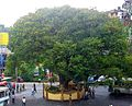 City of Srilanka, Hatton.jpg