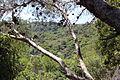 "Cliff Observatory, Kelach Wadi, Carmel Park ""Little Switzerland"" IMG 9066.JPG"