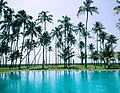 Coconut trees and pool.jpg