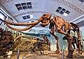 Columbian mammoth (Mammuthus columbi).jpg