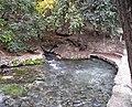Comal springs 2007.jpg