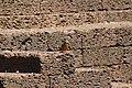 Common kingfisher (19).jpg
