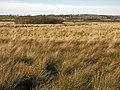 Cors Caron north of Allt-ddu farm - geograph.org.uk - 1138356.jpg