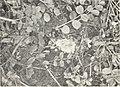 Cottony rot of lemons in California (1916) (14766432512).jpg
