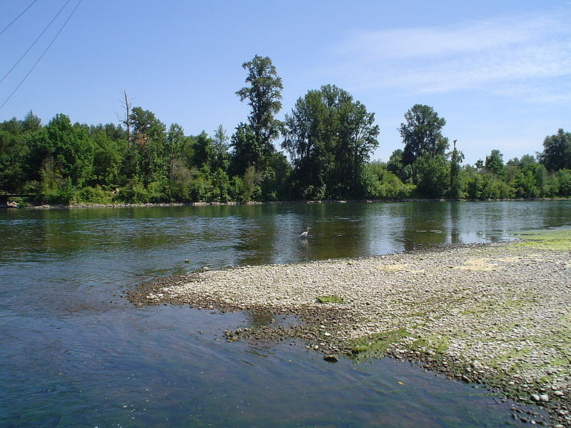 File:Crane in Willamette River, Marion County.JPG