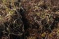 Cranesville Swamp Preserve 17.JPG