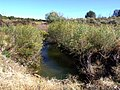 Creek Crossing - panoramio.jpg
