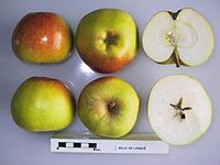 Cross section of Belle de Longue, National Fruit Collection (acc. 1950-116).jpg