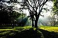 Cubbon Park, Bangalore.jpg