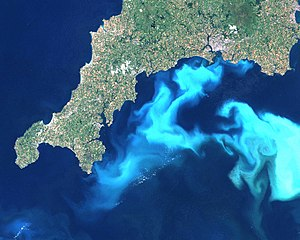 Under certain conditions, Emiliania huxleyi can form massive blooms which can be detected by satellite remote sensing. What looks like clouds in the water, is in fact the reflected light from billions of coccoliths floating in the water-column. Landsat image from 24th July 1999, courtesy of Steve Groom, Plymouth Marine Laboratory. This bloom attracted considerable coverage in the UK media. (Photo credit: Wikipedia)