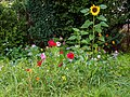Dülmen, Hausdülmen, Blumen am Straßenrand -- 2015 -- 8899.jpg