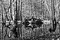 Dülmen, Wildpark -- 2020 -- 0257 (bw).jpg
