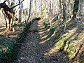 DD-Bienertgarten-Mühlgraben2.jpg