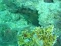 DSC00051 - peixes - Naufrágio e recifes de coral no Nilo.jpg