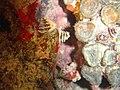 DSC00147 - recifes de coral - Naufrágio e recifes de coral no Nilo.jpg