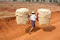 DSC00915 Burma Trek Kalaw-Indein Inlé Lake Shan State (4678526975).jpg