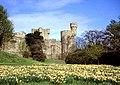 Daffodils at Penrhyn Castle, Bangor - North Wales - geograph.org.uk - 28725.jpg