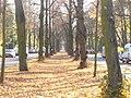 Dahlem - Podbielskiallee - geo.hlipp.de - 30066.jpg