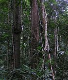 The Daintree Rainforest, a wilderness area in Queensland, Australia.