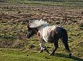 Dartmoor DSC 7341.jpg