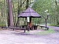 Daszek w Wielkopolskim Parku Narodowym.JPG