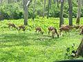 Deerinmtr 01.jpg
