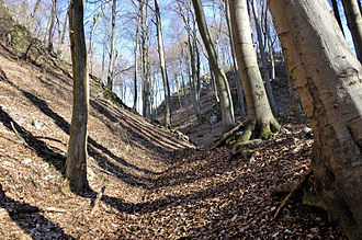 Dell (landform) - Dell in the Little Carpathians with a dry stream channel