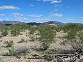 Desert 2 (15748109387).jpg