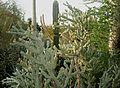 Desert Botanical Garden, Phoenix, Arizona - panoramio.jpg