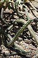 Desert Botanical Gardens 6-7 (22654797299).jpg