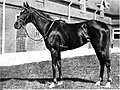 Diadem (horse).jpg
