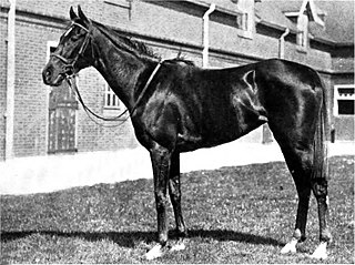 Diadem (horse) 20th-century Thoroughbred racehorse