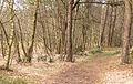 Diakonievene. Natuurgebied van It Fryske Gea 018.jpg