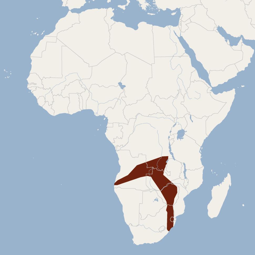 Distribution of Hypsugo anchietae