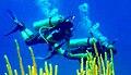 DivingCuba3.jpg