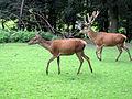 Dortmund-Zoo-IMG 5472-a.jpg